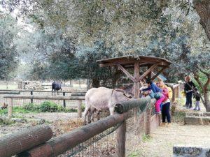 zoo carini